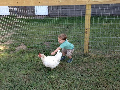 Desmond with Chicken